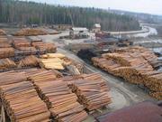 Продам лес -кругляк различных пород.