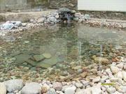 Пруд декоративный,  водопад,  водоем искусственный,  фонтан,  ручей в РБ