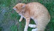 Рыжий котик в хорошие и ответственные руки