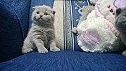 Резервируются котята
