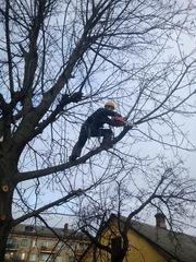 Спилить,  удалить,  обрезать дерево